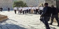 """""""الأوقاف"""": أكثر من 500 مستوطن اقتحموا الأقصى بحماية شرطة الاحتلال صباح اليوم"""